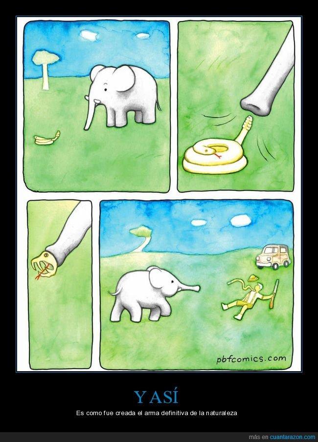 cazador,elefante,lanzar,serpientetrompa