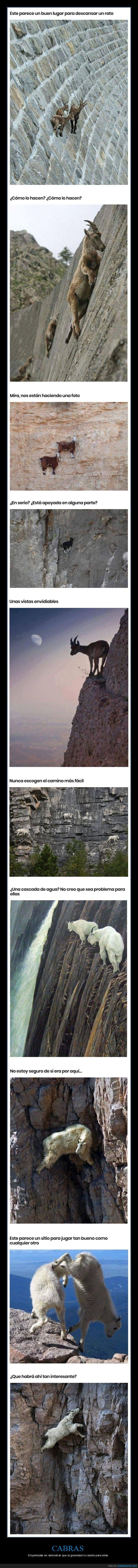 cabras,gravedad,wtf