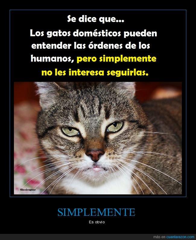 entender,gatos,órdenes