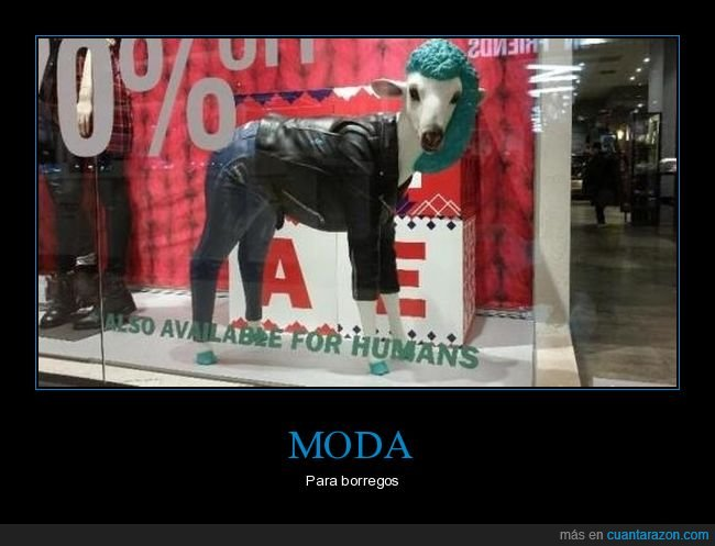 escaparate,moda,oveja,wtf