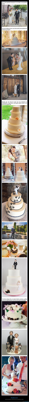 bodas,mascotas,parejas