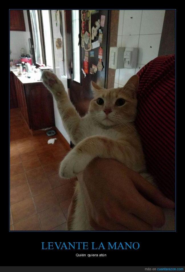 atún,gato,levantar,mano,pata