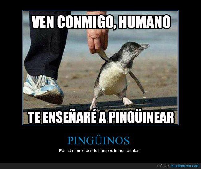 pingüinear,pingüinos