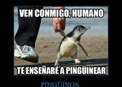 Enlace a Este pingüino quiere enseñarte cosas