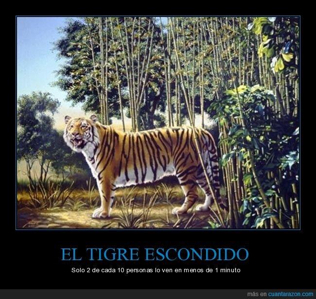 acertijo,escondido,tigre