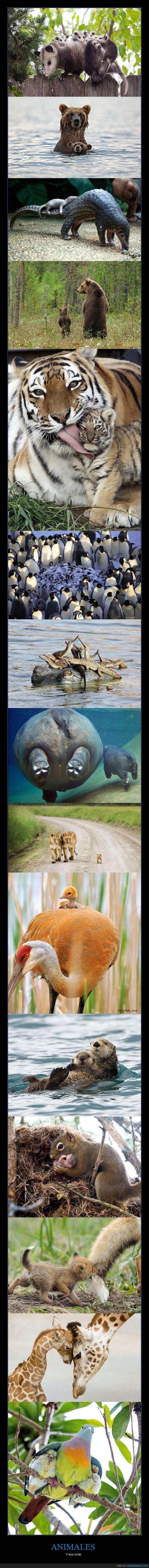 animales,crías