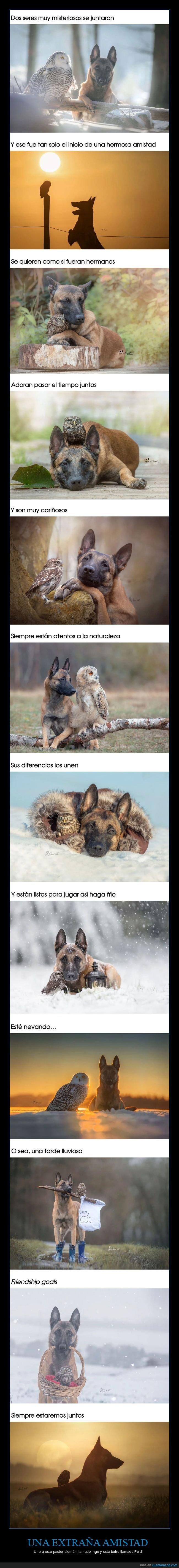 amistad,búho,perro