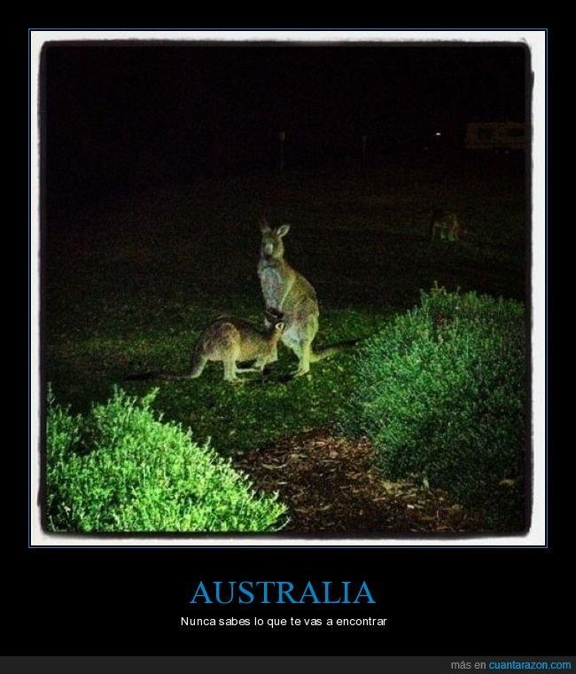 australia,canguros,pillados,wtf
