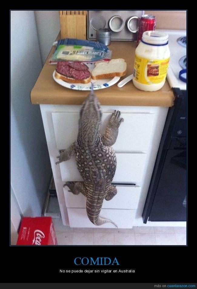 comida,lagarto,sin vigilar