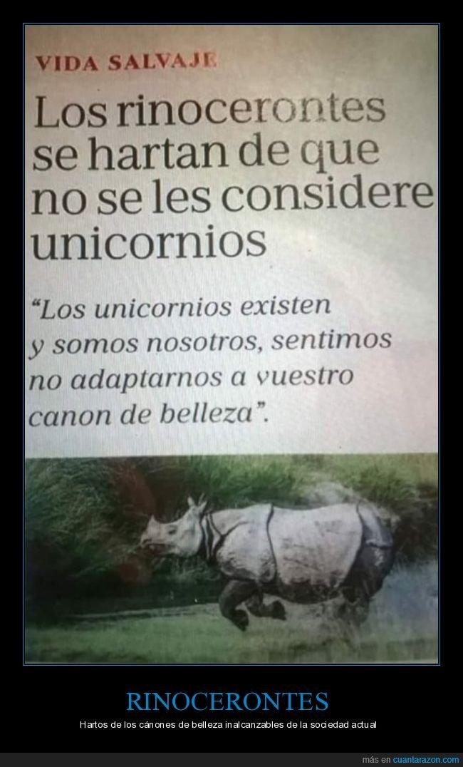 cánones de belleza,rinocerontes,unicornios