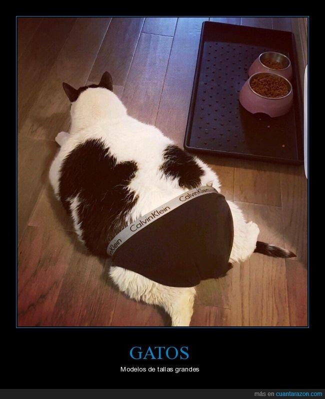 calzoncillos,gato,gordo