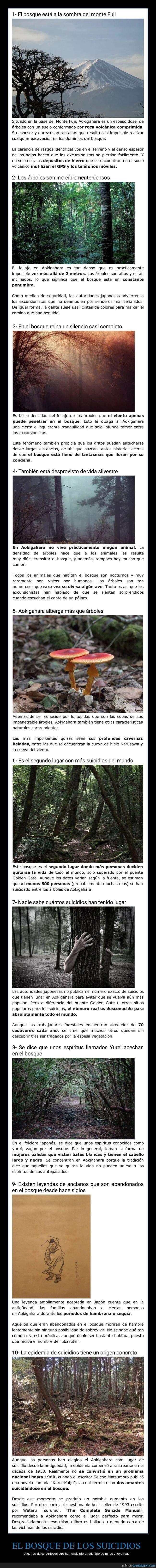 bosque,bosque de los suicidios,curiosidades,mitos