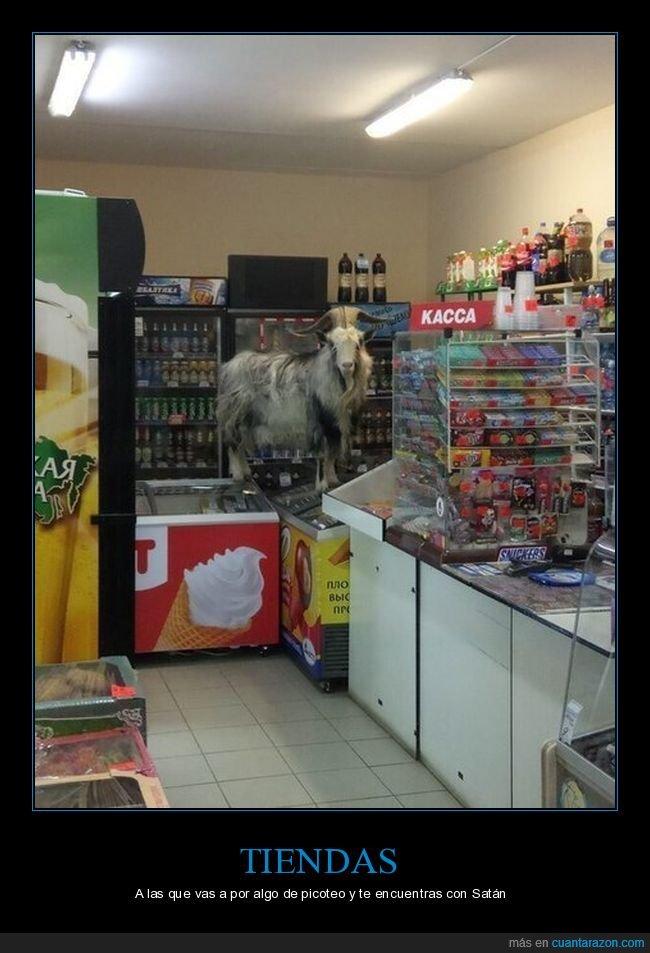 cabra,tienda,wtf
