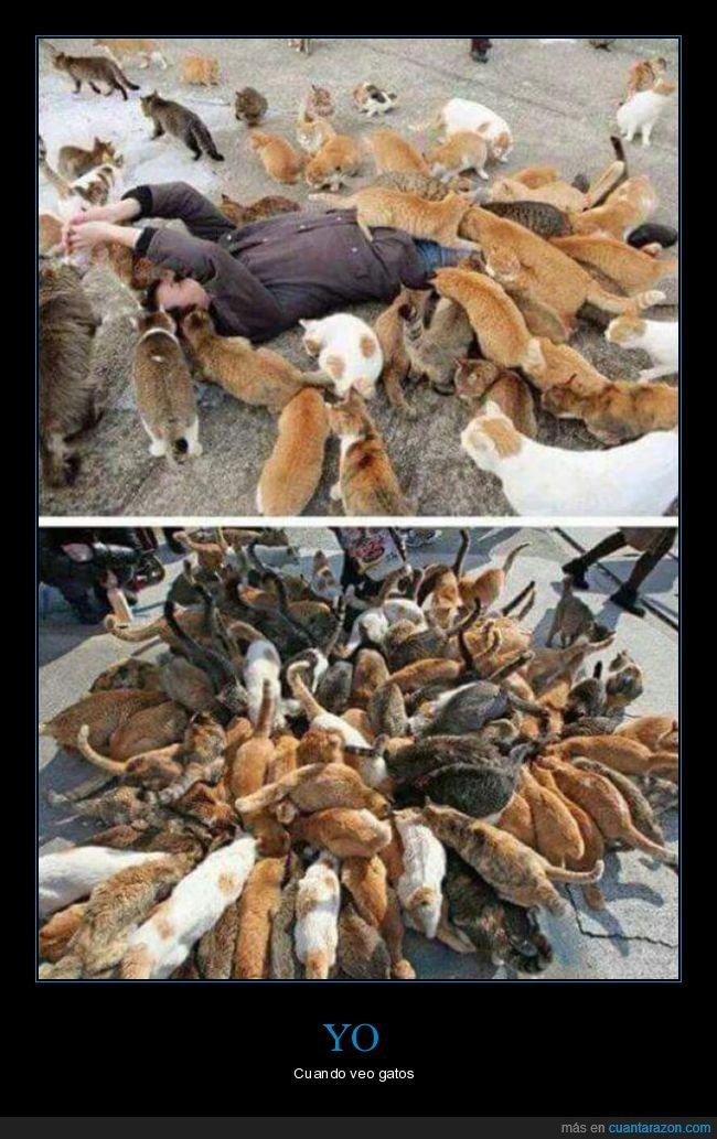 gatos,muchos,wtf