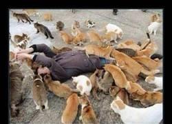 Enlace a Los gatos le aman