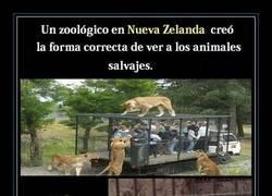 Enlace a Zoológicos de Nueva Zelanda