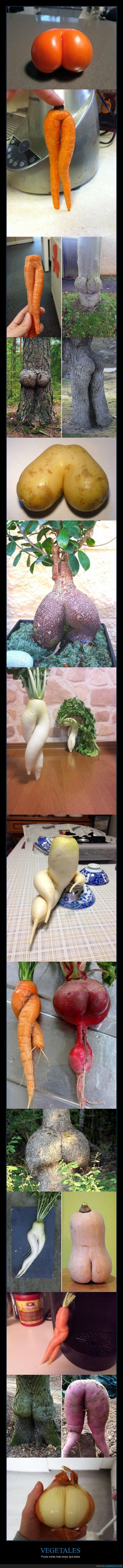 hortalizas,sexys,vegetales
