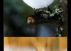 Enlace a Este fotógrafo finés retrata a los Angry Birds en la vida real