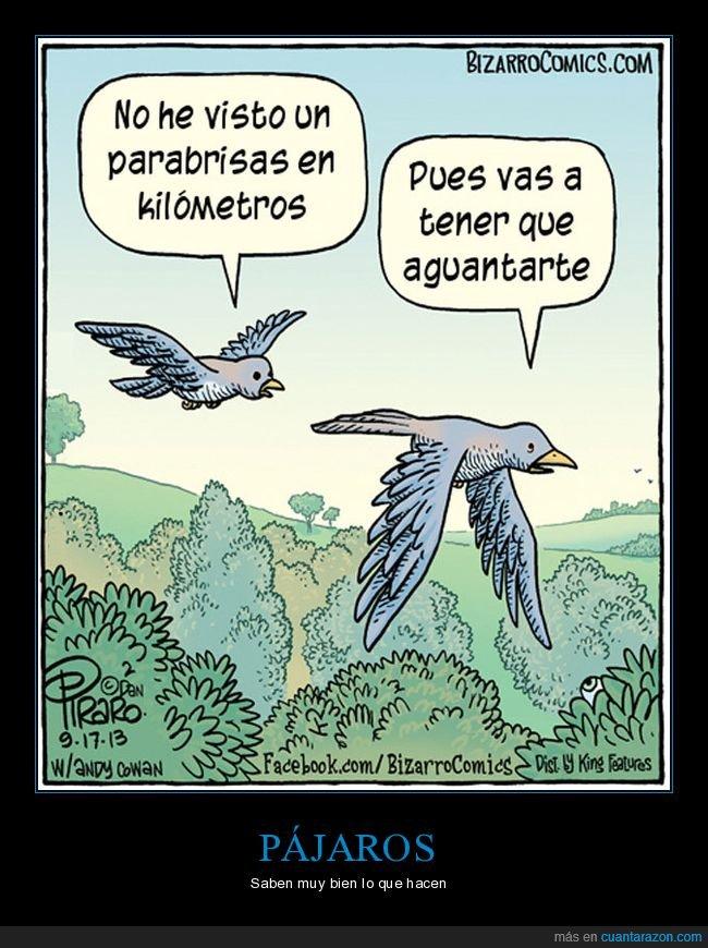 aguantarse,pájaros,parabrisas