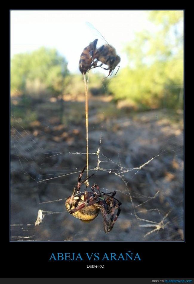 abeja,araña,doble ko