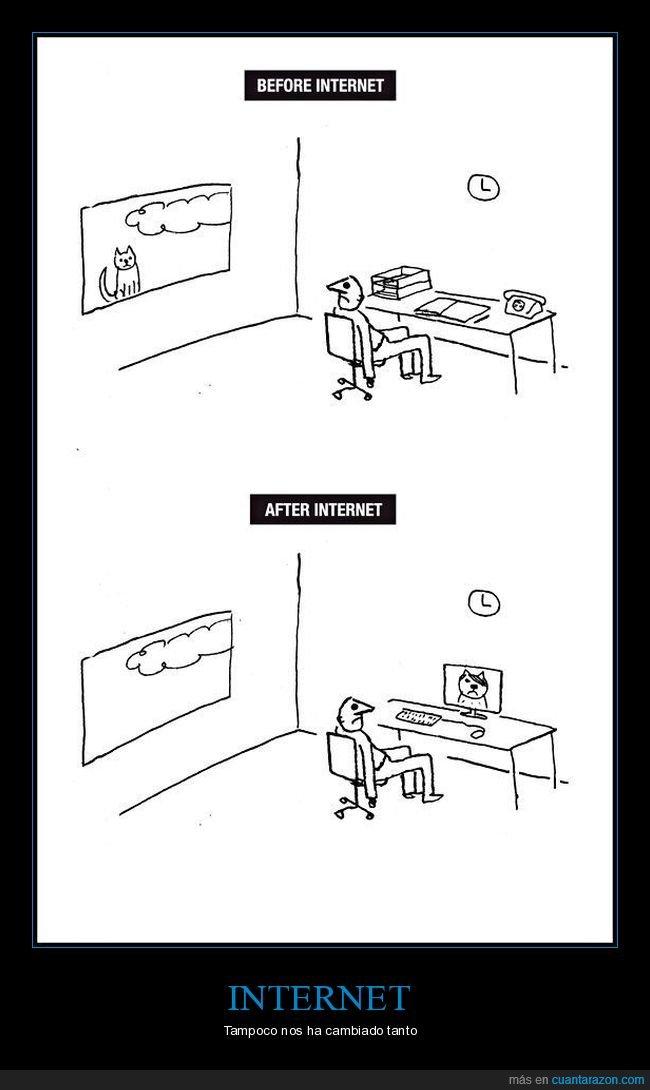 antes,después,gato,internet