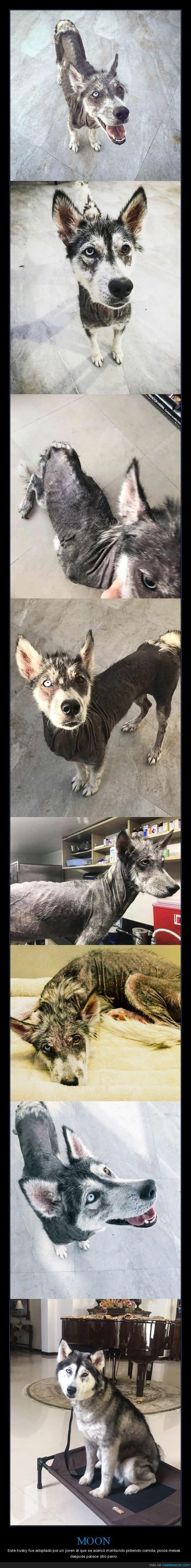 adoptado,antes,después,perro,transformación