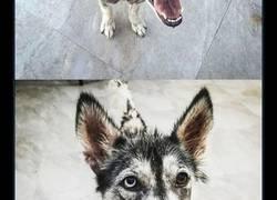 Enlace a Si no crees en las segundas oportunidades, debes conocer la historia de este perro
