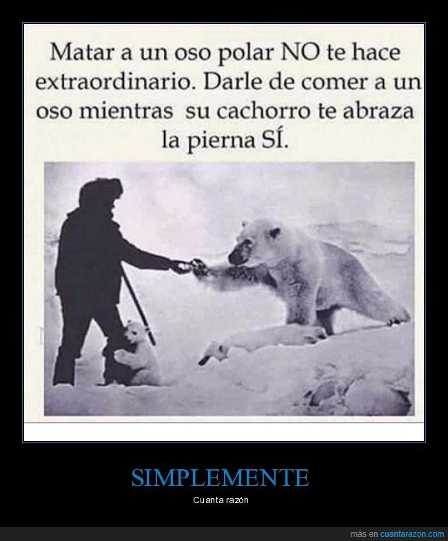 cachorro,dar de comer,matar,oso polar