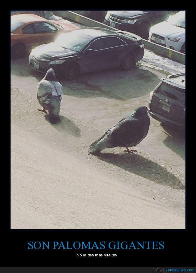 gigantes,palomas,perspectiva