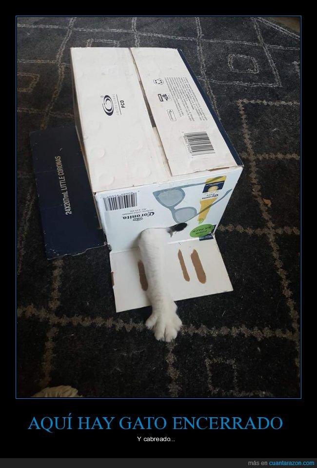 cabreado,encerrado,gato