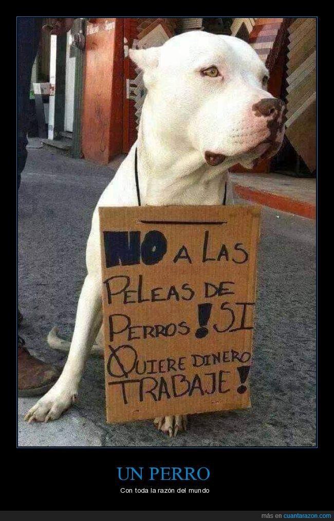 cartel,peleas de perros,perro
