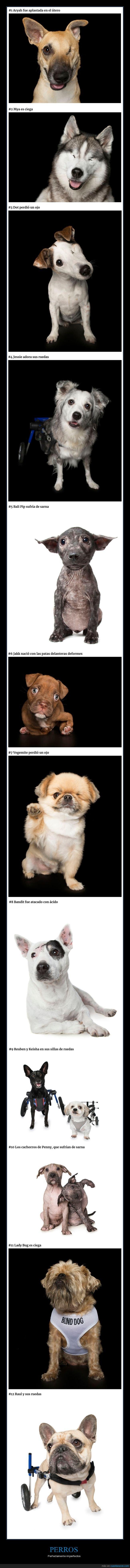 discapacitados,perros