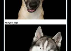 Enlace a Este fotógrafo hace retratos de perros que son perfectamente imperfectos