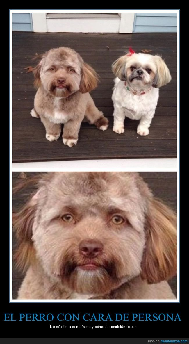 cara,perro,persona
