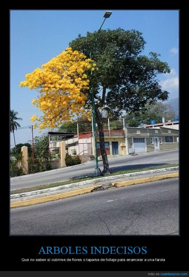 árboles,farola,flores,indecisos