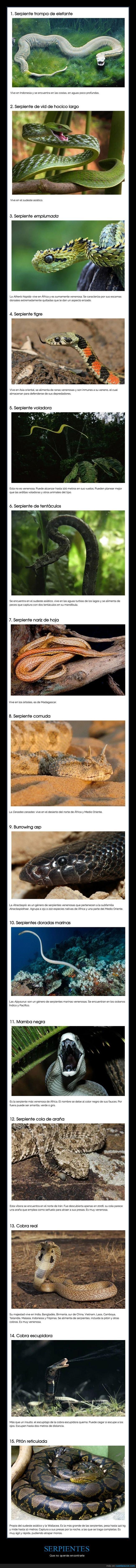 curiosidades,peligrosas,serpientes