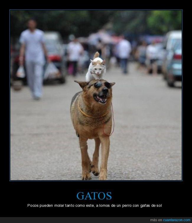 gafas de sol,gato,perro