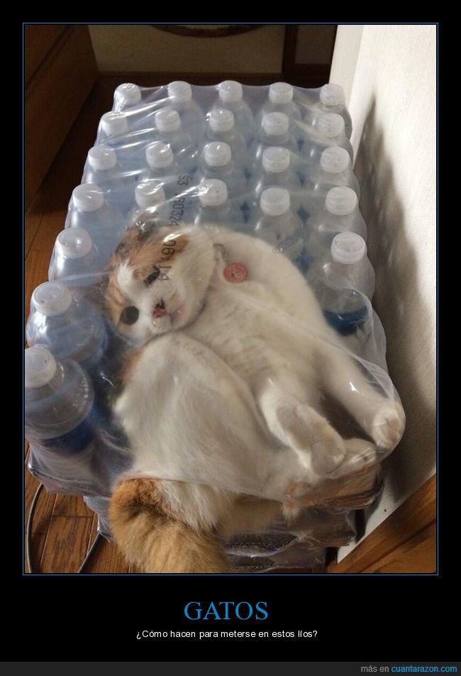 atrapado,botellas,gato,wtf