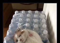 Enlace a Cosas de gatos