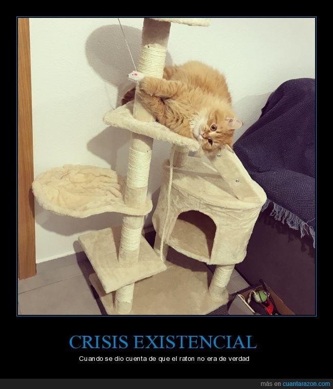 crisis,existencia,Gato