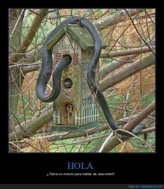 caseta,pájaros,serpiente