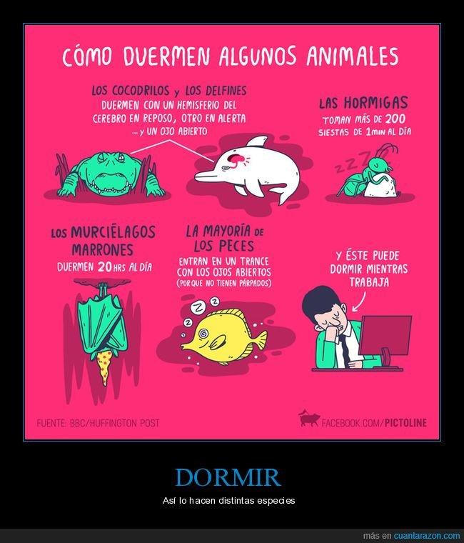 animales,dormir,trabajar