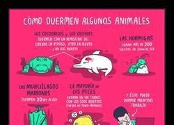 Enlace a Así duermen distintas especies de animales
