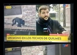 Enlace a Ese mono es insobornable
