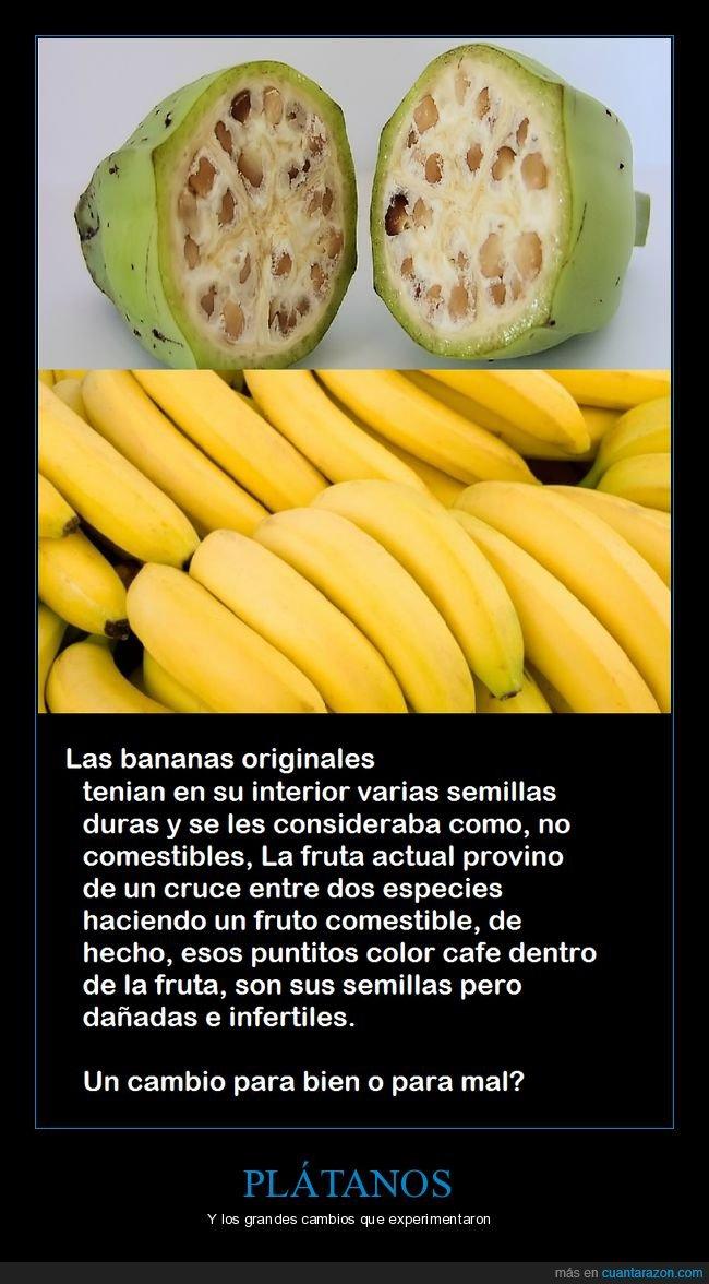 cambios,frutas,genética,plátanos,semillas
