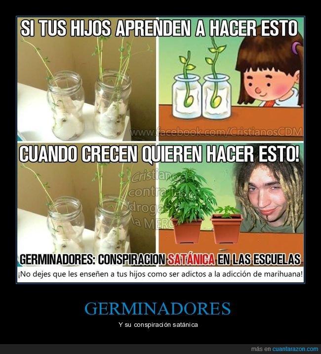 aprender,conspiración,germinar,marihuana,planta