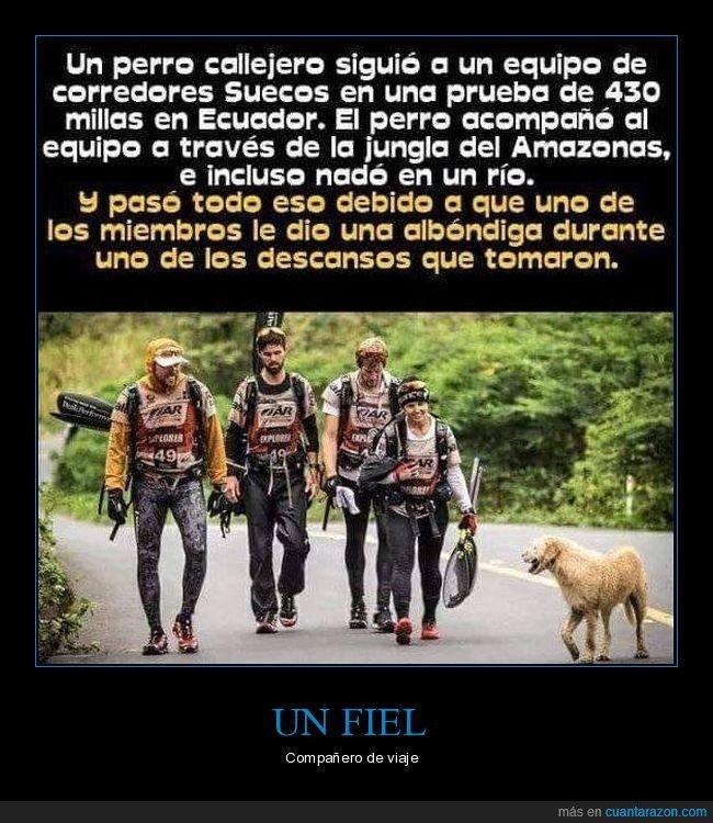 comida,corredores,perro,seguir
