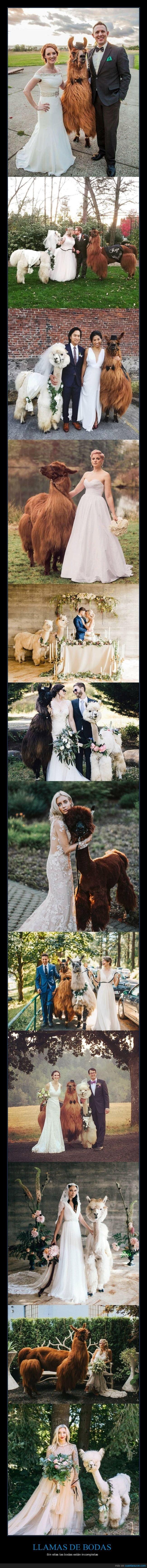 bodas,llamas