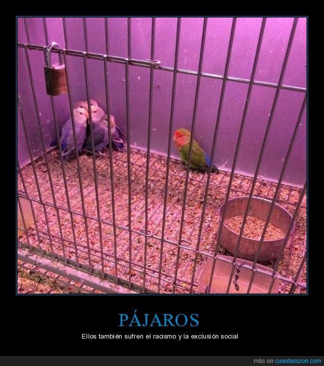 colores,exclusión,pájaros,racismo