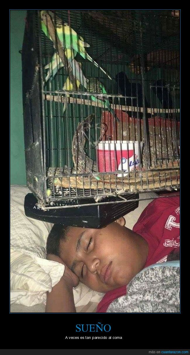 durmiendo,jaula,pájaro,trolling